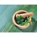 مجموعه کامل گیاهان داروئی در 5 سی دی