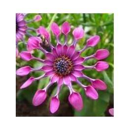 آموزش پرورش گلهای زینتی