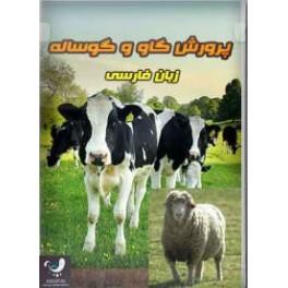 آموزش پرورش گاو و گوساله و گوسفند