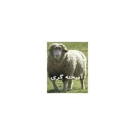 آموزش آمیخته گری کنترل شده گوسفند