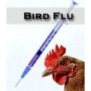 آشنایی با آنفولانزای پرندگان