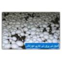 آموزش تصويري پرورش قارچ خوراكي به زبان فارسي